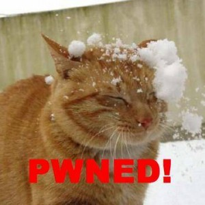 Pwned-cat_headshot
