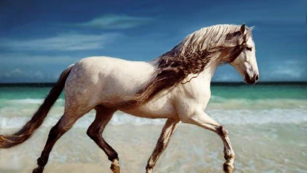 5159-horses-horse-on-the-beach
